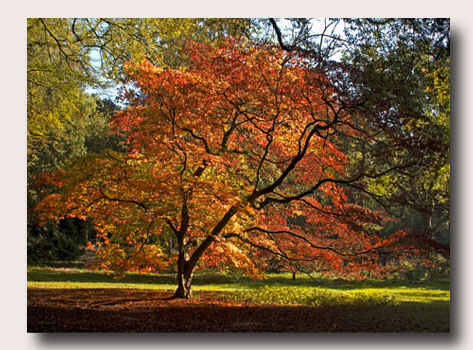 Westonbirt Areboretum - Autumn 2008... Click to download...